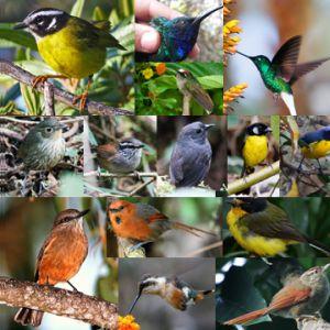 birds_sq1