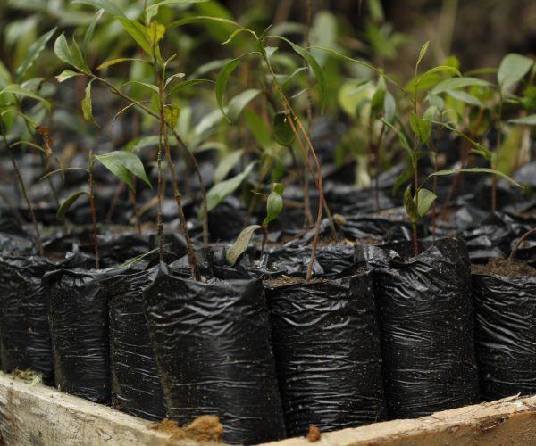 Mejoramiento y ampliación del vivero (Tangara Multicolor) de plantas nativas. RNA Arrierito Antioqueño (1)