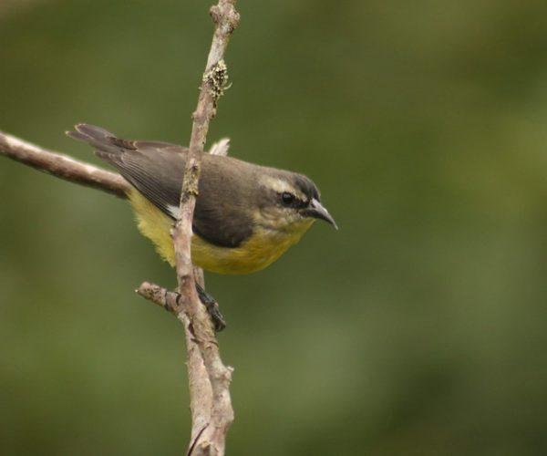 bebederos para colibries- RNA las tangaras (3)